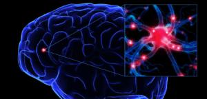 9-me-BC_brain