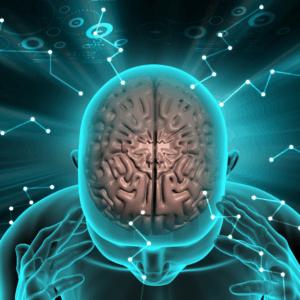 adderall_in_the_brain